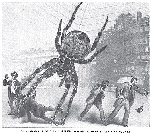Araneus Diadema spider, Strand Magazine, 1910
