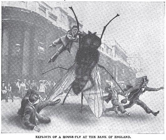 house-fly, Strand Magazine, 1910