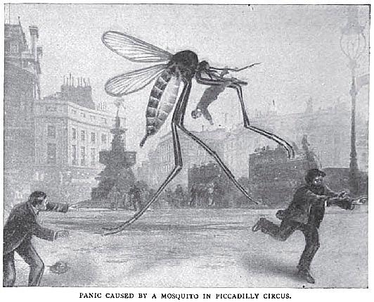 mosquito, Strand Magazine, 1910