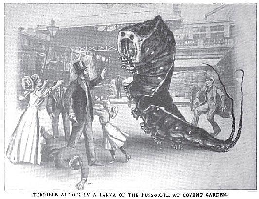 puss-moth caterpillar, Strand Magazine, 1910