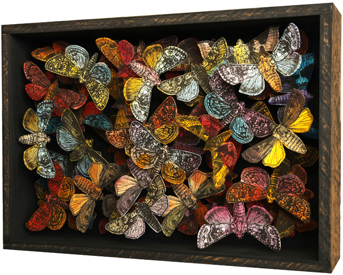 John Dilnot moth collection
