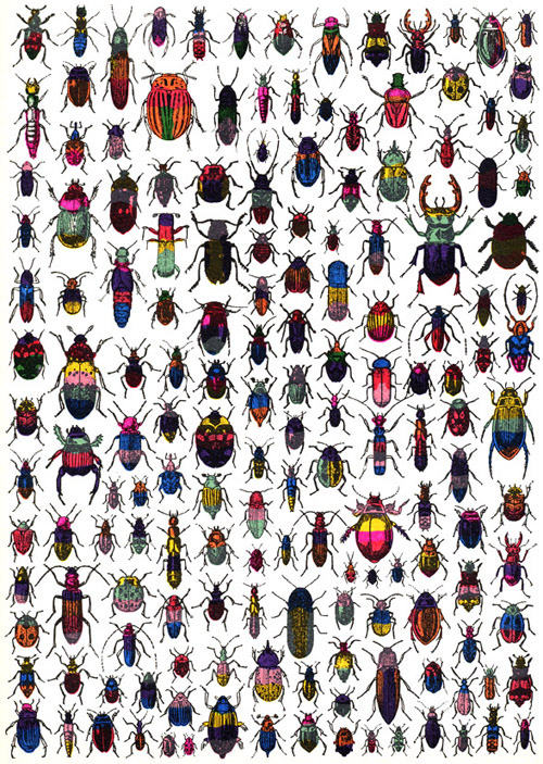 dilnot_beetles
