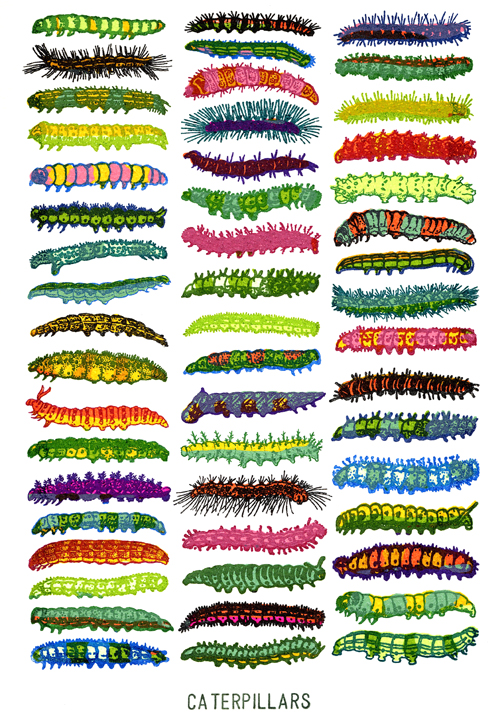 dilnot_caterpillars