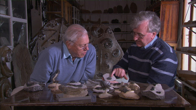 Tonight on Paleo-Antiques Roadshow: We sort the fakes from the Phacops